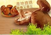 用同樣代價買香菇為何不買有品牌包証的賴媽媽香菇?
