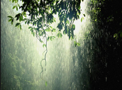Rainfall in the Tropical Rainforest