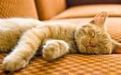 Cat sleepnig