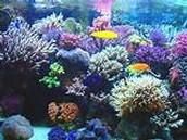 3 - El coral
