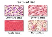 Blood and body tissues