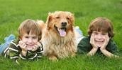 Felicidade para seu pet