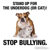 bullyes need to under stand that the bullying to others relly hirts