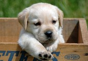Pet Friendly!!