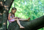 Reading in a tree? Oh, my!