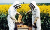 Bee keepers