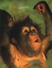 What makes you a primate