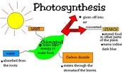 HOW DOES PHOTOSYNTHESIS WORK!!!!!!
