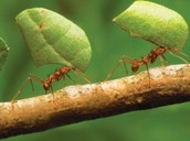 Ants build their homes underground.