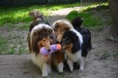 Fletcher & pups