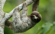 Sloths are beautiful creatures!