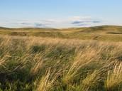 Grassland and Savannahs fun facts