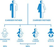 How Cystic Fibrosis is inherited