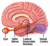 Basic Neuropathways