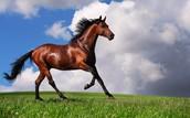 My horse (Gabby)