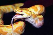 Шаг 1. Кто такие змеи?