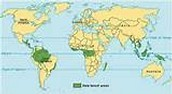 Map of rainforest