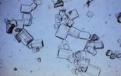 Microscopische onderzoek