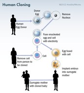 The cloning if an human