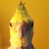 Meet Dasher.