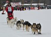 Junior Iditarod starting line
