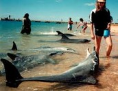 Wildlife vets can work with marine animals as well as land animals.