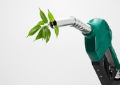 If a company bought your biofuel, would it be a good idea for them to go ahead and move it into production?