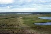 Coastal plains        Rating:9