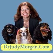 Energetics of Pet Food with Dr. Judy Morgan: Webinar 4