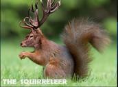 The Squirrel-leer