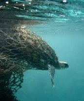 The Ghost Net Project