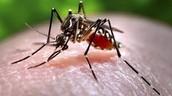 Health Effects of the Zika Virus
