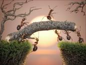 How ants build