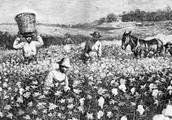 Slaves/Farming