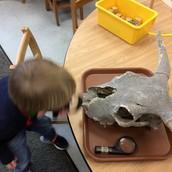 John Weldon examines a real skull