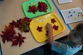 Fall Leaf Size Sorting