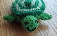 Susan B. Anderson's turtle!