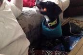 My puppy!! Now