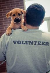 ¿Cómo nos convertimos en la ASPCA?