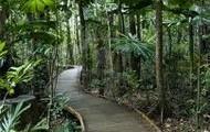 rainforest board walk