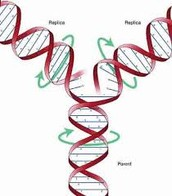 Motion of DNA rotation