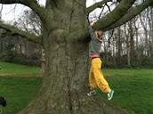 Me gustaba trepar a los árboles porque yo era curiosa.