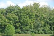 Forest Enterance