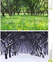 Two seasons
