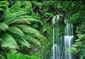 Forests Biome