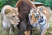 Good Zoo's