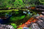 Cano Cristales in Colombia