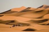 Camel Rides!!!