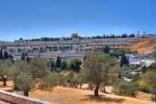 11. Jerusalem Olive Mountain