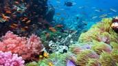Sea Life in Kailua Kuna, Hawaii